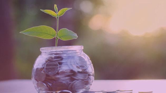Eine kleine Grünpflanze ist in einem mit Geldmünzen gefüllten Glas eingepflanzt.