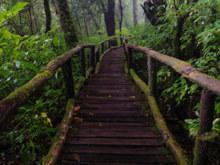Ein mit Moos bewachsener Holzweg führt entlang grüner Pflanzen durch einen Wald.
